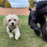 Hundehaftplicht-Versicherung